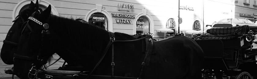 Pferd auf Blitzerfoto schützt Autofahrer 1
